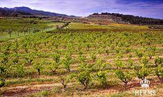 HERMS vineyeard Vineyard, Outdoor, Wine Making, Ghosts, Outdoors, Vine Yard, Vineyard Vines, Outdoor Games, The Great Outdoors