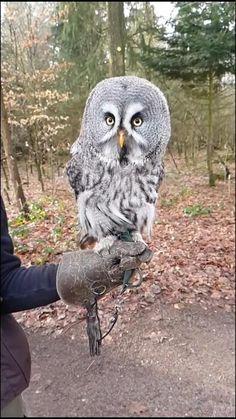 Funny Birds, Cute Funny Animals, Cute Baby Animals, Funny Owls, Wild Animals Pictures, Owl Pictures, Owl Photos, Animal Quotes, Animal Memes