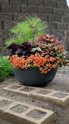 A low pot, filled with color and texture, will delight for months to come!