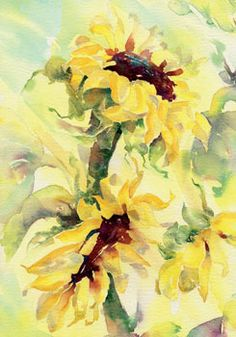 'Sunflowers' by Sheila Gill Fine Art