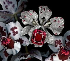 Orchids Jewelry by Cartier Paris