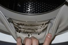 pulizia-lavatrice-muffa