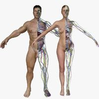 Male / Female Full Body Anatomy Combo Model available on Turbo Squid, the world's leading provider of digital models for visualization, films, television, and games. Human Anatomy Model, Anatomy Models, Human Anatomy And Physiology, Body Anatomy, Anatomy Drawing, Human Kidney, Brain Models, 3d Human, Muscular System