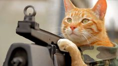 Medal of Honor Cat - Cute Kittens Videos Cute Kitten Gif, Kittens Cutest, Funny Animal Pictures, Best Funny Pictures, Badass Cat Names, Funny Cats, Funny Animals, Funniest Animals, Cat Machines