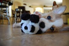 this picture, | 108 Reasons Why Corgis Really Are That Great