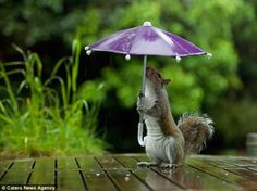 Photographer Gives Squirrel Mini-Umbrella to Shelter Him From the Rain....[Photo Gallery]