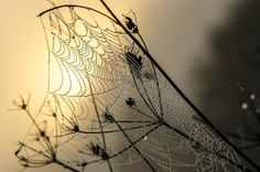 Spiderweb frosty Belle Photo, Photos, Table Lamp, Home Decor, Foggy Morning, Canvas, Photography, Homemade Home Decor, Pictures