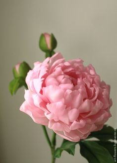 Купить Розовый пион с бутонами - розовый, пион из полимерной глины, керамическая флористика, реалистичная флористика