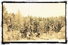 Narnia-like woods