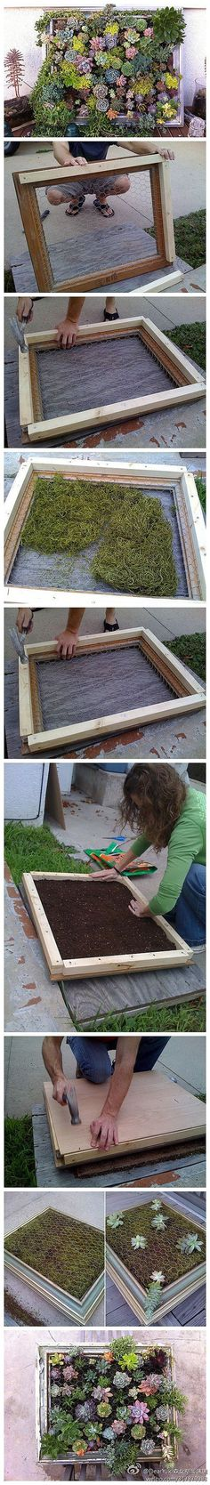 picture frame succulent planter {vertical planters for salad greens & herbs, too} Más