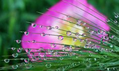 dew drops by tugba kiper, via 500px