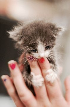 This looks like the tiny kitten Annie finds in Texas Haven- Burke named her cat http://www.kathleenballromance.com