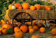 Fragrance Friday | Pumpkin