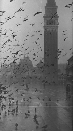 Pigeons in Piazza San Marco on a rainy day with St. Mark's Basilica in the bkgd, by Dmitri Kessel (1952)