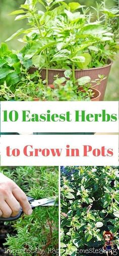 The best herbs to grow in containers #Herbs