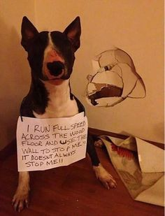 Sounds about right for a bull terrier. Incidentally, I think that bull terrier is my son's spirit animal. Cute Funny Animals, Funny Animal Pictures, Funny Cute, Funny Dogs, Silly Dogs, That's Hilarious, Animal Pics, I Love Dogs, Cute Dogs