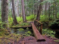 Blue Ridge Path