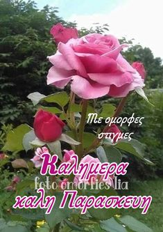 Rose, Flowers, Plants, Wisdom, Pink, Plant, Roses, Royal Icing Flowers, Flower