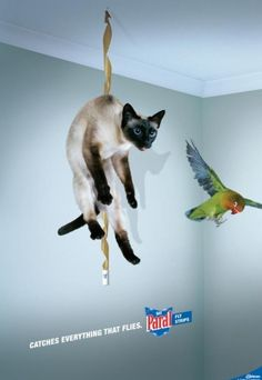 #CatFail (but a cool ad)