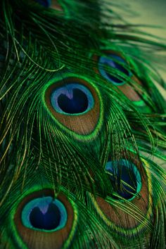 Peacock Art Print, wall art, fine art photography, home decor, colorful, green, exotic, wall art, feathers