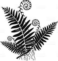 vector-fern-with-new-growth-curls-in-black-and-white-vector-id536616699 (973×1024)