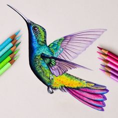 humming bird Picture of a beautiful hummingbird drawn using colored pencils. Hummingbird drawn with Faber Castell Polychromos and Caran Dache Luminance and Pablos and Holbeins . Colored Pencil Artwork, Pencil Art Drawings, Bird Drawings, Art Drawings Sketches, Colorful Drawings, Animal Drawings, Colored Pencils, Pencil Colour Art, Watercolor Pencil Art