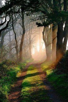 Cardinham woods, Cornwall via Bromptom Finch