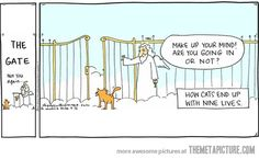 How cats end up with 9 lives…