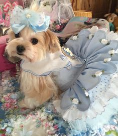 Heaven Sent in Blue is a very special dress made for a little Biewer girl named Heaven. It is made of pale blue swiss batiste that is scalloped with a tiny white satin rosebud added at each point. The underskirt is of white and blue cotton dotted swiss and is trimmed with blue swiss