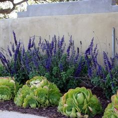 ground cover ideas using gravel ... great idea for California's drought! With drought tolerant plants.