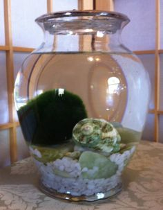 Marimo in a Jade Palace by Biophilia, Guelph, Ontario $35 Marimo, Recycled Glass, Ontario, Palace, Jade, Palaces, Castles, Castle