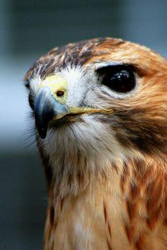 NFL Jerseys - Falcons QB Steve Bartkowski | People I've Interviewed | Pinterest ...