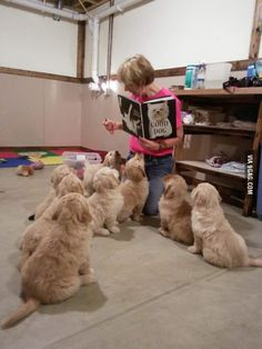 Reading therapy dogs in training. Oh my goodness, so sweet, Love.