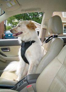 Kurgo Auto Zip Line Leash Combo Dog Car New Safety Secure :00032