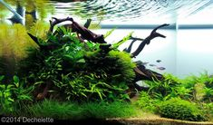 2014 AGA Aquascaping Contest - Entry #176