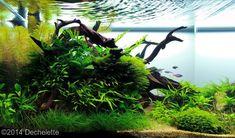 2014 AGA Aquascaping Contest - Entry #176