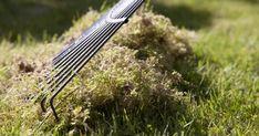 Oft wird der mühsam neu angelegte Rasen binnen weniger Jahre vom Moos überwuchert. Die Gründe sind immer dieselben: Fehler bei der Rasenanlage oder -pflege, oft aber auch beides. So wird Ihr Rasen dauerhaft moosfrei.