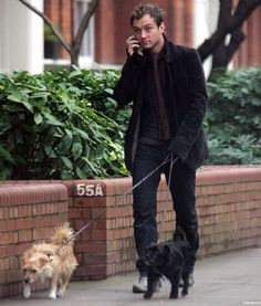 Jude Law walking his dogs