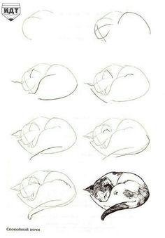 Katze zeichnen schritt für schritt