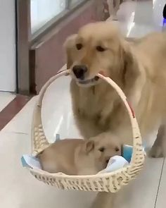 Cute Baby Dogs, Cute Funny Dogs, Cute Dogs And Puppies, Cute Funny Animals, Cute Cats, Doggies, Baby Animals Pictures, Cute Animal Pictures, Cute Animal Videos