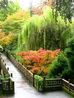 Crystal Springs Rhododendron Garden, Portland, Oregon - Entry Walk