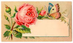 Blank Victorian trade card with a rose and butterfly