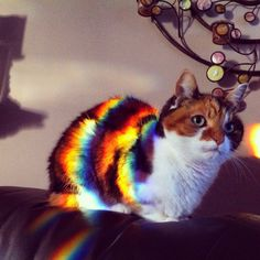A rainbow-colored cat!! <3 | This cat who actually turned into Nyan cat. | 37 Cats Who Totally Won 2014