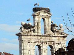 Cigüeñas en Alcalá de Henares (Madrid)