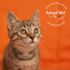 June is available to adopt from CoronadoCARES, http://www.coronadocares.org, and Coronado Veterinary Hospital, http://www.nadovet.com