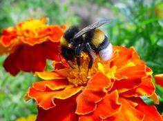 Site colaborativo monitora sumiço de abelhas | Catraca Livre