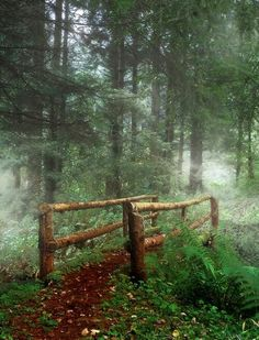 Ireland ~ a small wooden bridge crosses a creek as fog begins to cover the ground. Mystical, indeed.