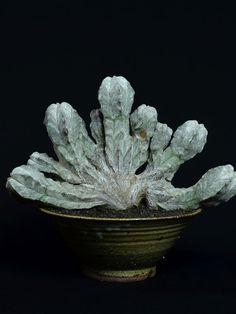 恩塚鸞鳳玉綴化 Astrophytum myriostigma 'Onzuka' f. crist