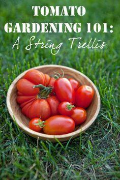 Alternative Gardning: Tomato Gardening 101: Tips for Growing Perfect Tomatoes