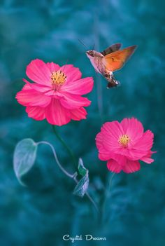 """Glory of Nature"" by Tatiana  Krylova on 500px"